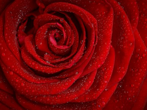 赤(レッド Red)のイメージ
