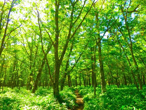 緑(グリーン Green)のイメージ