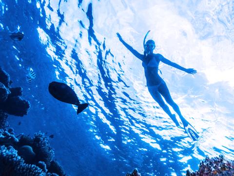 青(ブルー Blue)/紺(ネイビーブルー Navy blue)のイメージ
